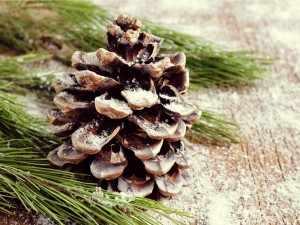Decorating Christmas Wreaths
