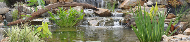 Ponds and Watergardening