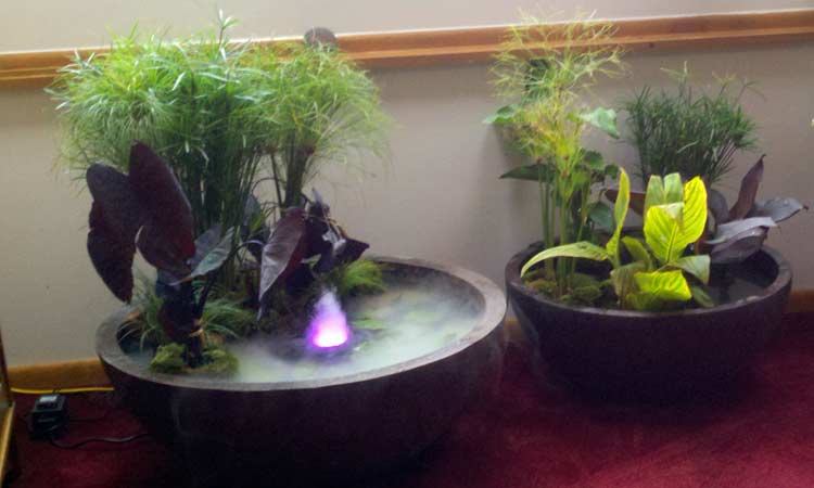 Container Water Garden Ideas Photograph Creative Gift Idea