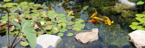 ponds-watergardens