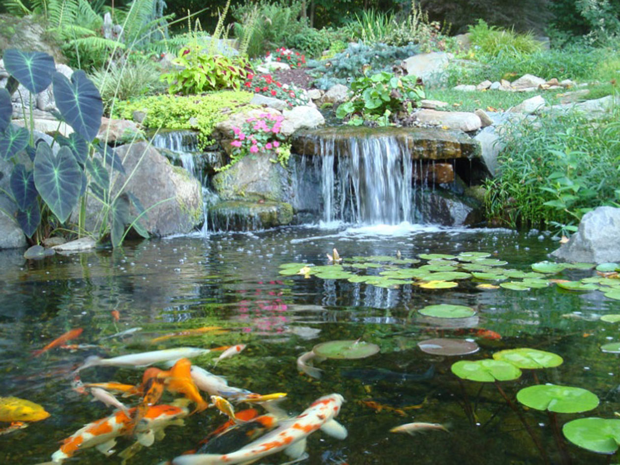 Ponds water garden pictures turpin landscaping for How to design a pond