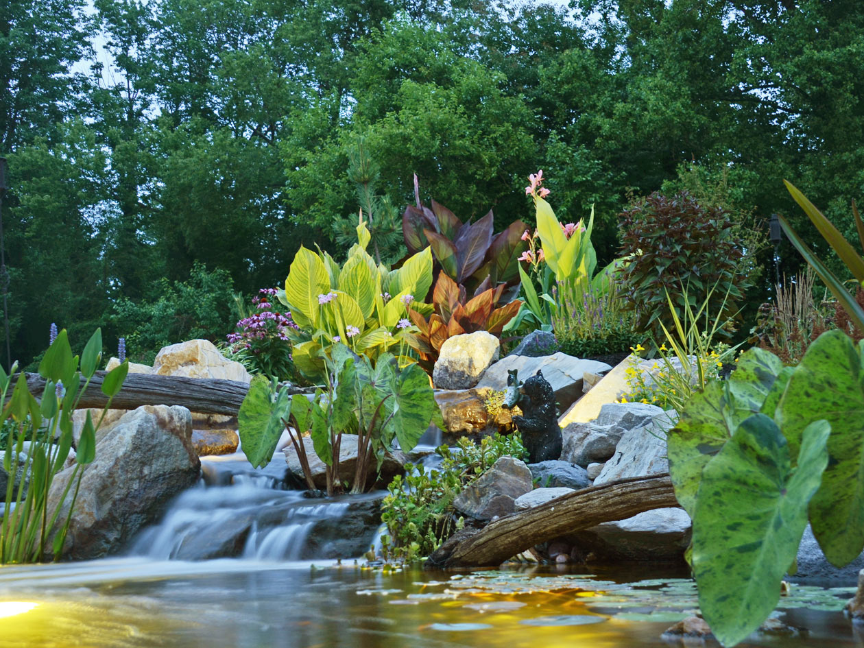 Ponds water garden pictures turpin landscaping for Garden pool ecosystem