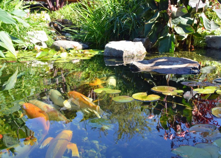 Pond cleanout pond maintenance in chester county by for Small fish pond care
