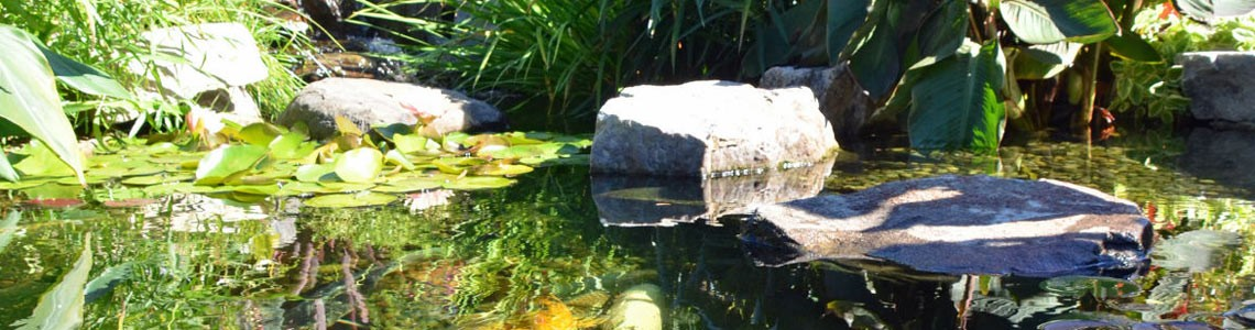 Schedule Your Pond Clean-Out in Montgomery County & Chester County, PA