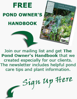 Pond Owner's Manual by Turpin Landscaping