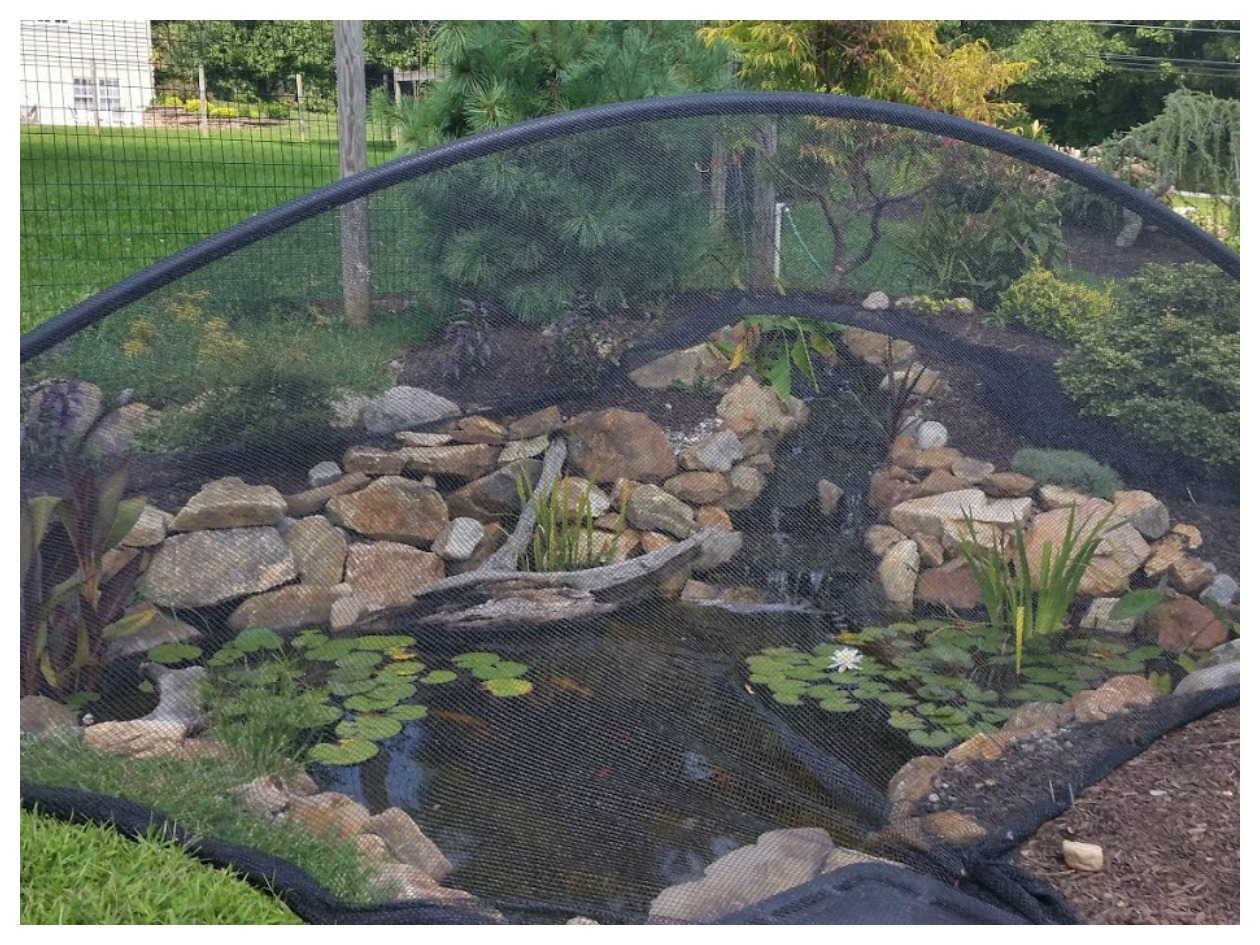 Fall Pond Maintenance And Pond Netting Turpin Landscaping