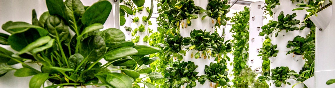 Aeroponics a Sustainable Way to Grow Fruits and Vegetables
