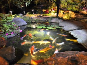 Underwater Pond Lighting