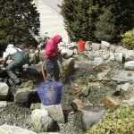 Pond Maintenance