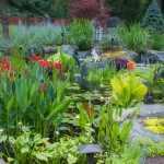Pond Plants