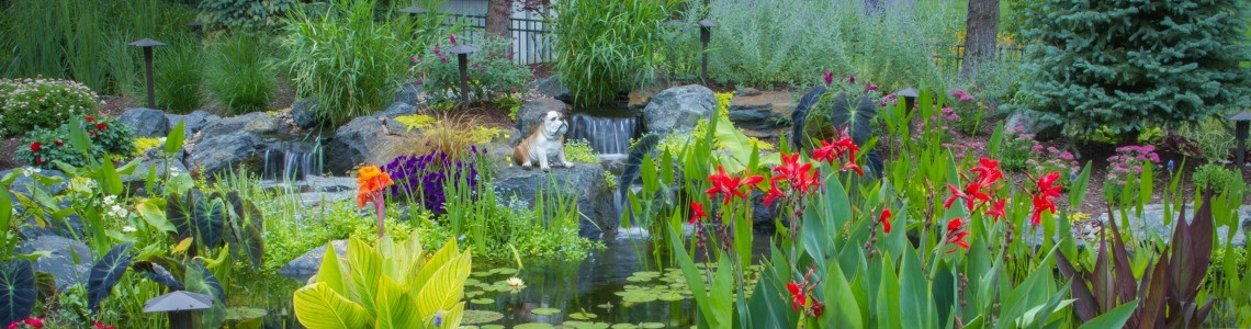 What are Pond Plants and How do they Benefit my Koi Pond in Philadelphia?