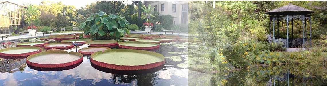 IWGS (International Waterlily & Water Gardening Society) at Longwood Gardens & Turpin